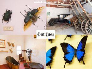 Anuncio casas y museos fauna