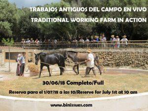 Excursión caballos Menorca